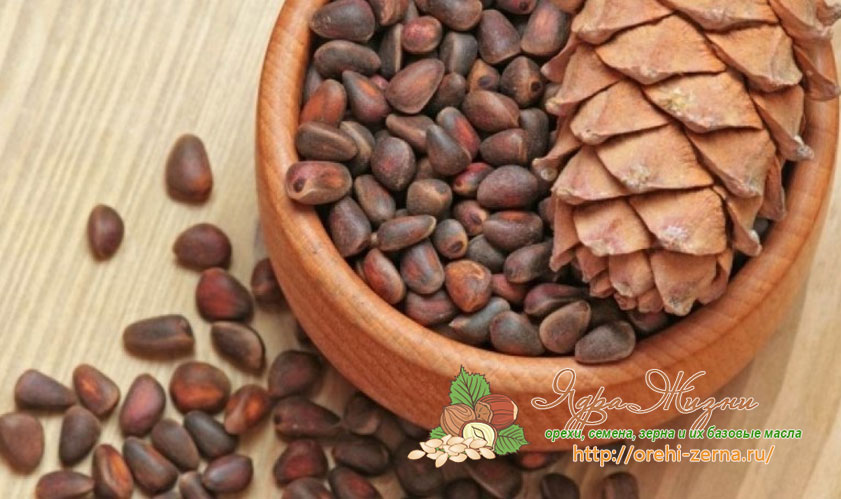 кедровые орехи полезные свойства
