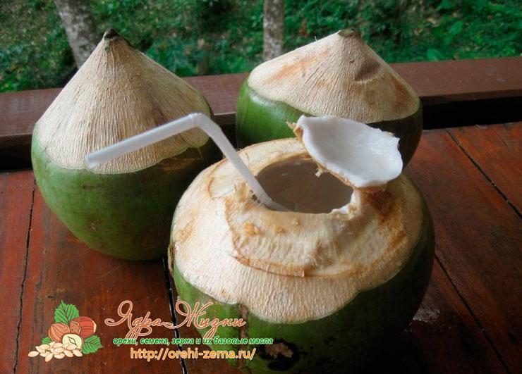 Как выбрать свежий кокос