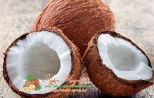 Фото: Кокос (кокосовый орех)