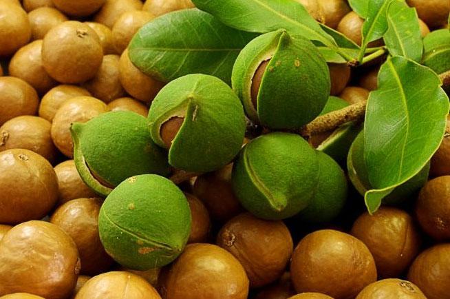 Фото: орех макадамия польза и вред