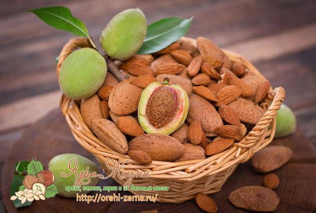миндальный орех польза и вред