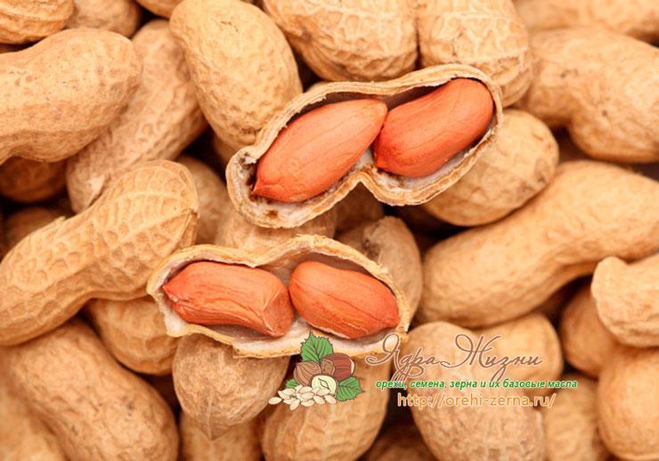 Полезные свойства арахиса: применение