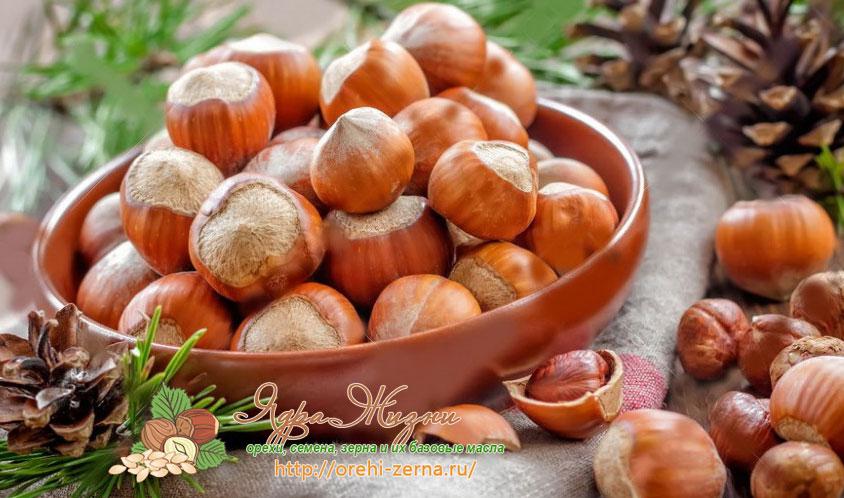 лесной орех фундук