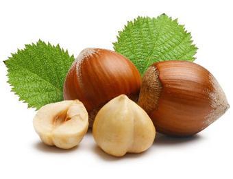 фундук лесной орех