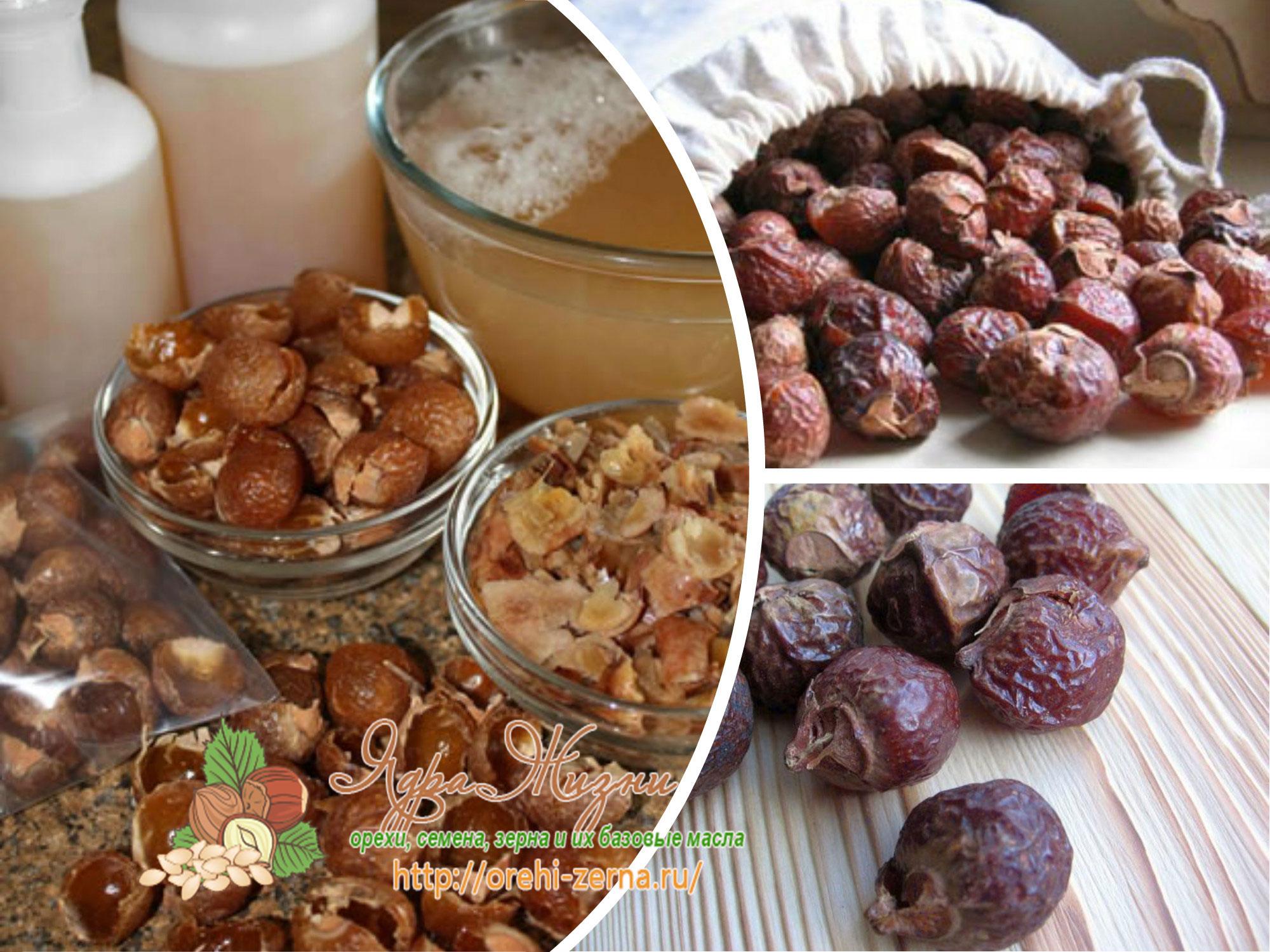 экстракт мыльного ореха