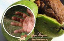 как отмыть руки от грецких орехов