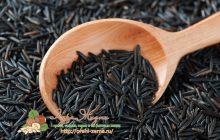 дикий черный рис