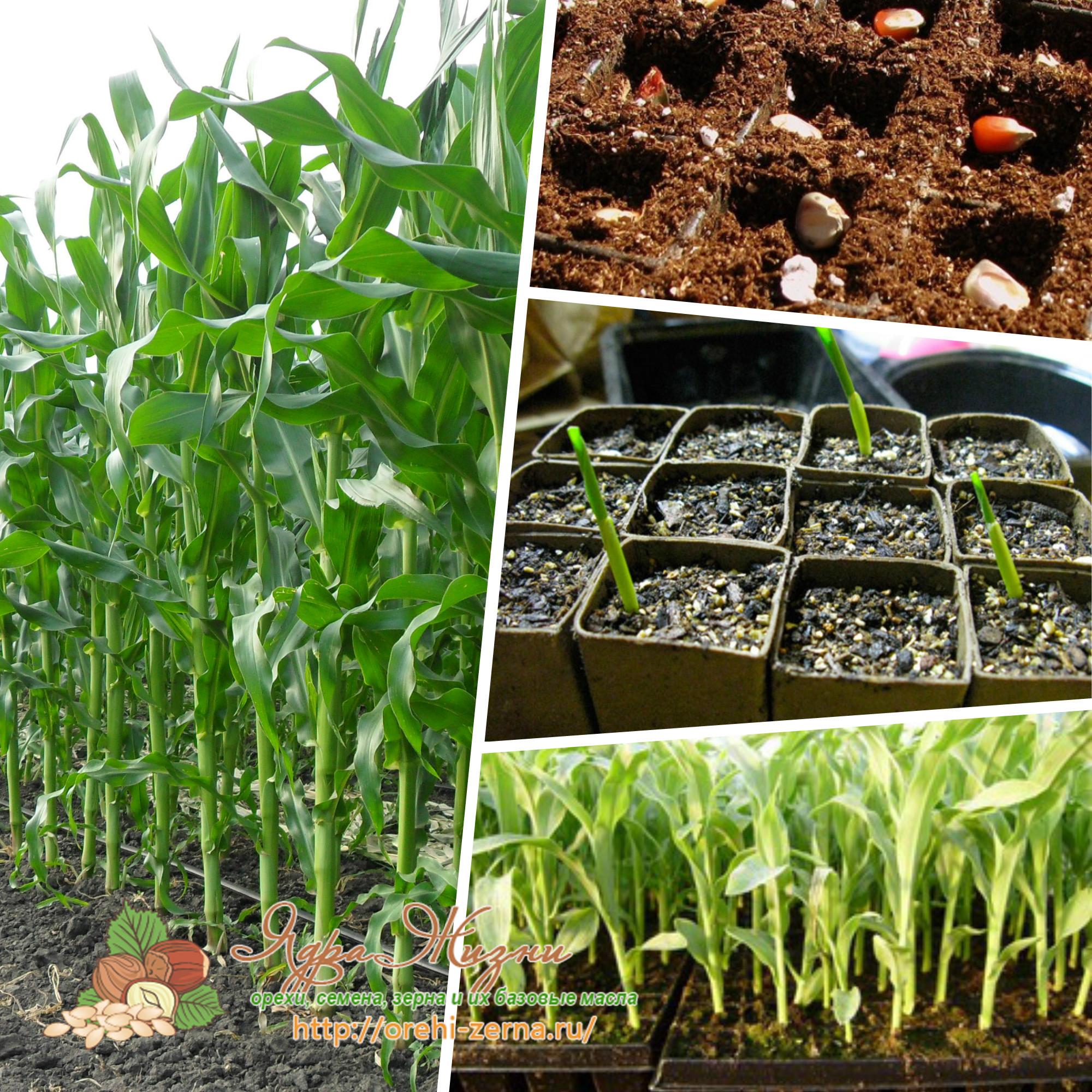 Посадка рассады: когда и как сажать семена 636
