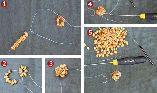 как насаживать пшеницу на крючок