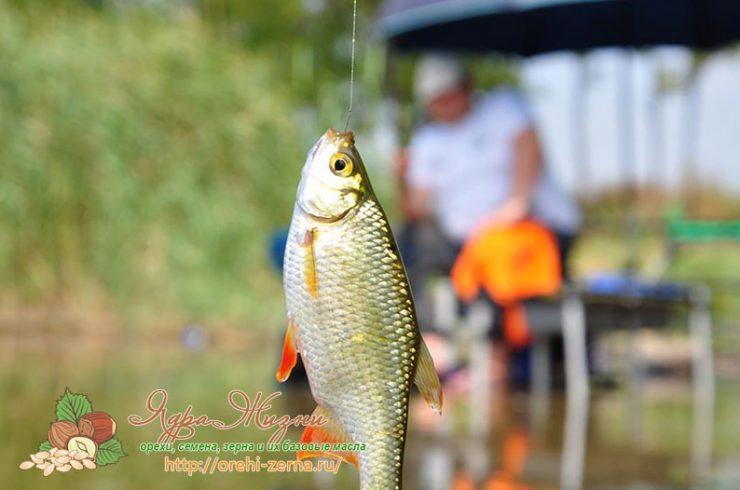 где клюет рыба в свердловской области сейчас