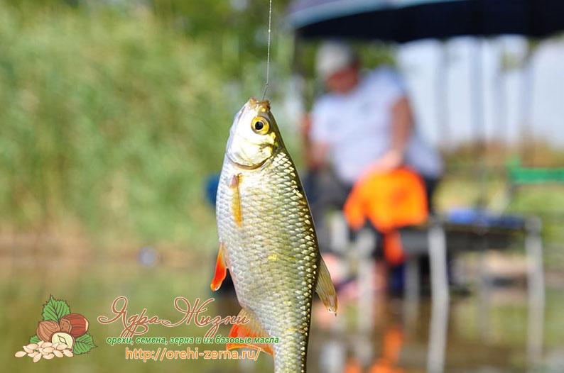какая рыба клюет в сентябре на сейме