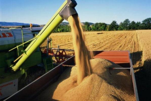как ухаживать за пшеницей в поле