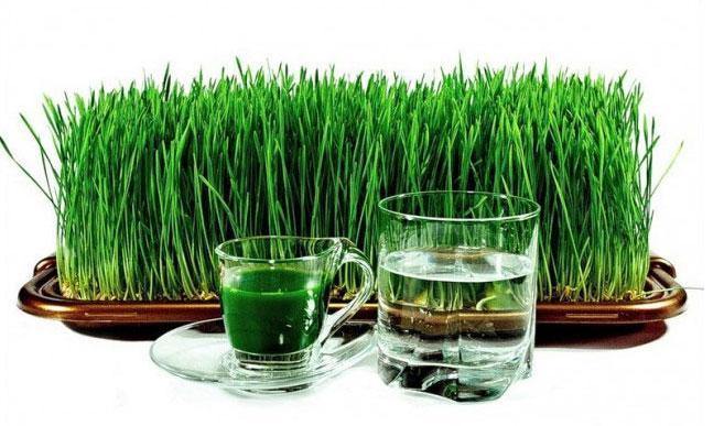 сок пророщенной пшеницы