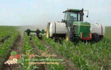 Как нужно удобрять кукурузу