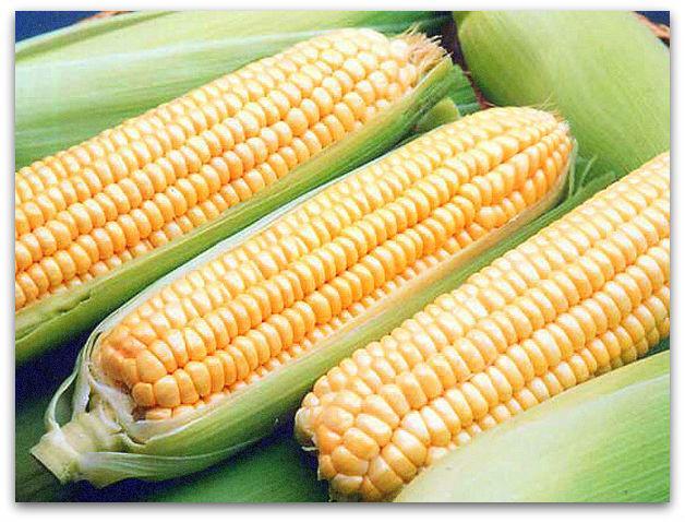 кукуруза поларис