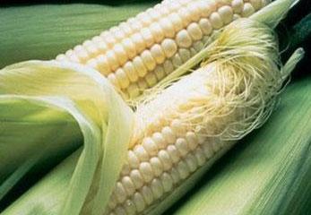 кукуруза ледяной нектар