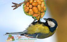 почему нельзя кормить пшеном птиц