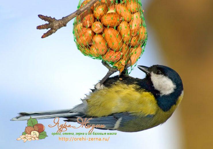 Пшено для птиц и какая крупа больше подходит для их подкормки || Почему птицам нельзя давать пшено