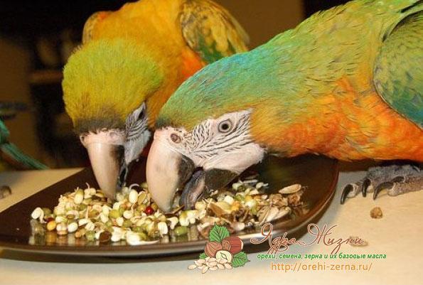 Пшено для попугаев