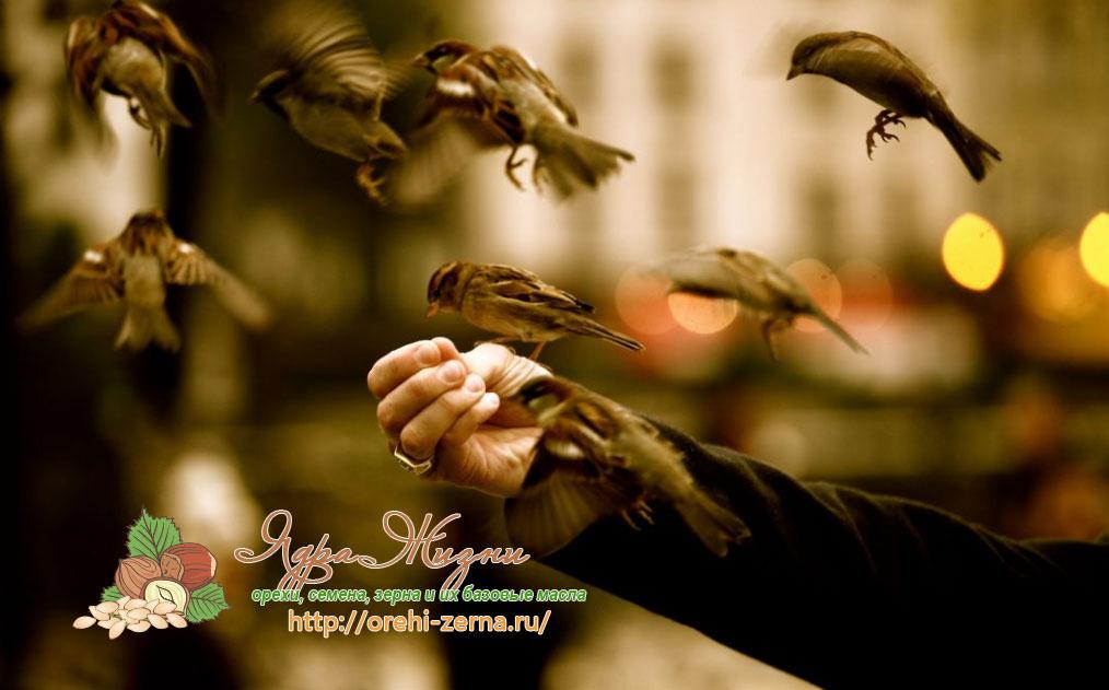 пшено для птиц