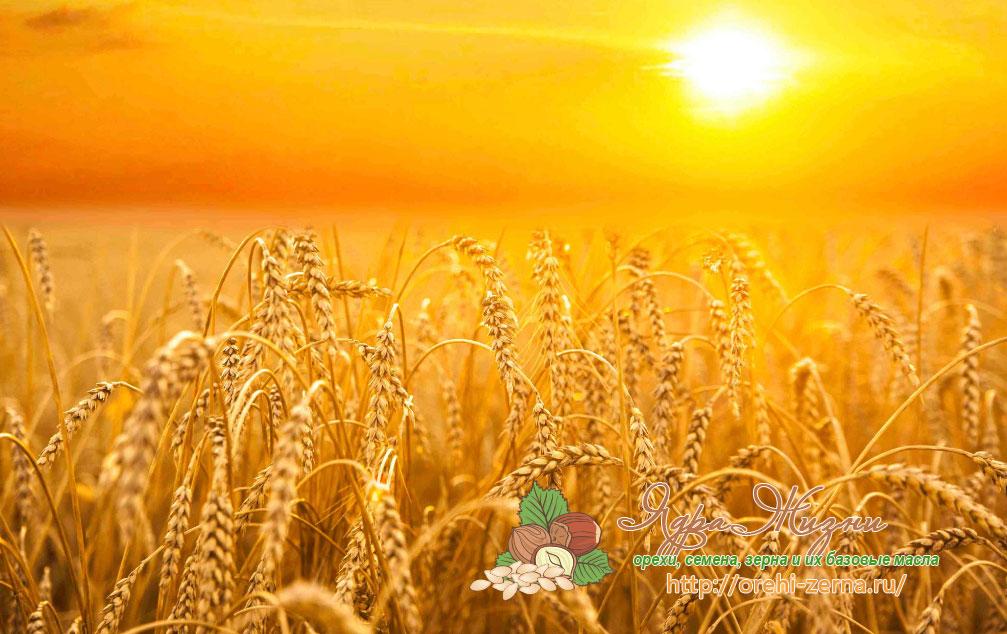 Урожайность ржи в России по регионам