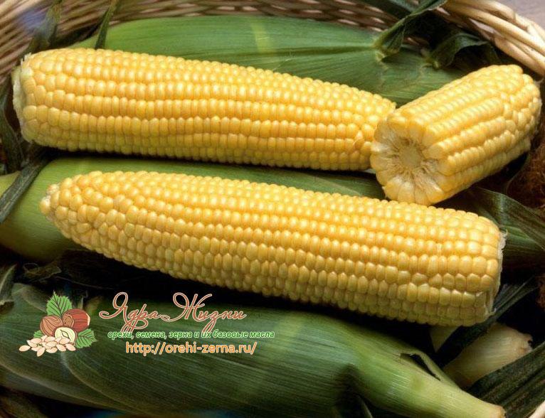 Сорт кукурузы кубанский сахарный