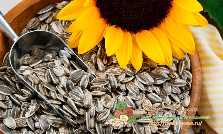 Подсолнечные семечки - сорта и виды