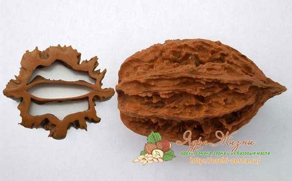 Лечебные свойства серого ореха