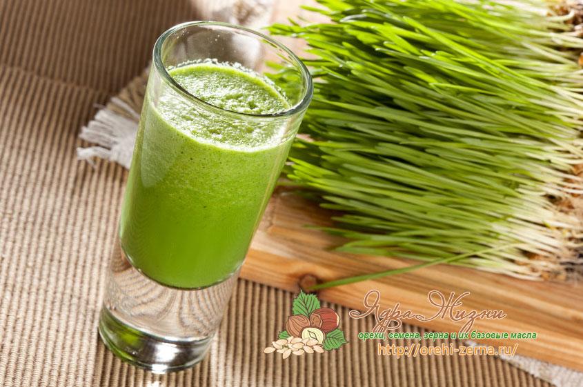 Польза и вред сока пророщенной пшеницы витграсс