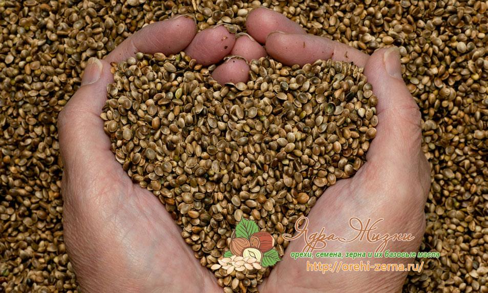 Семена конопли в лечении
