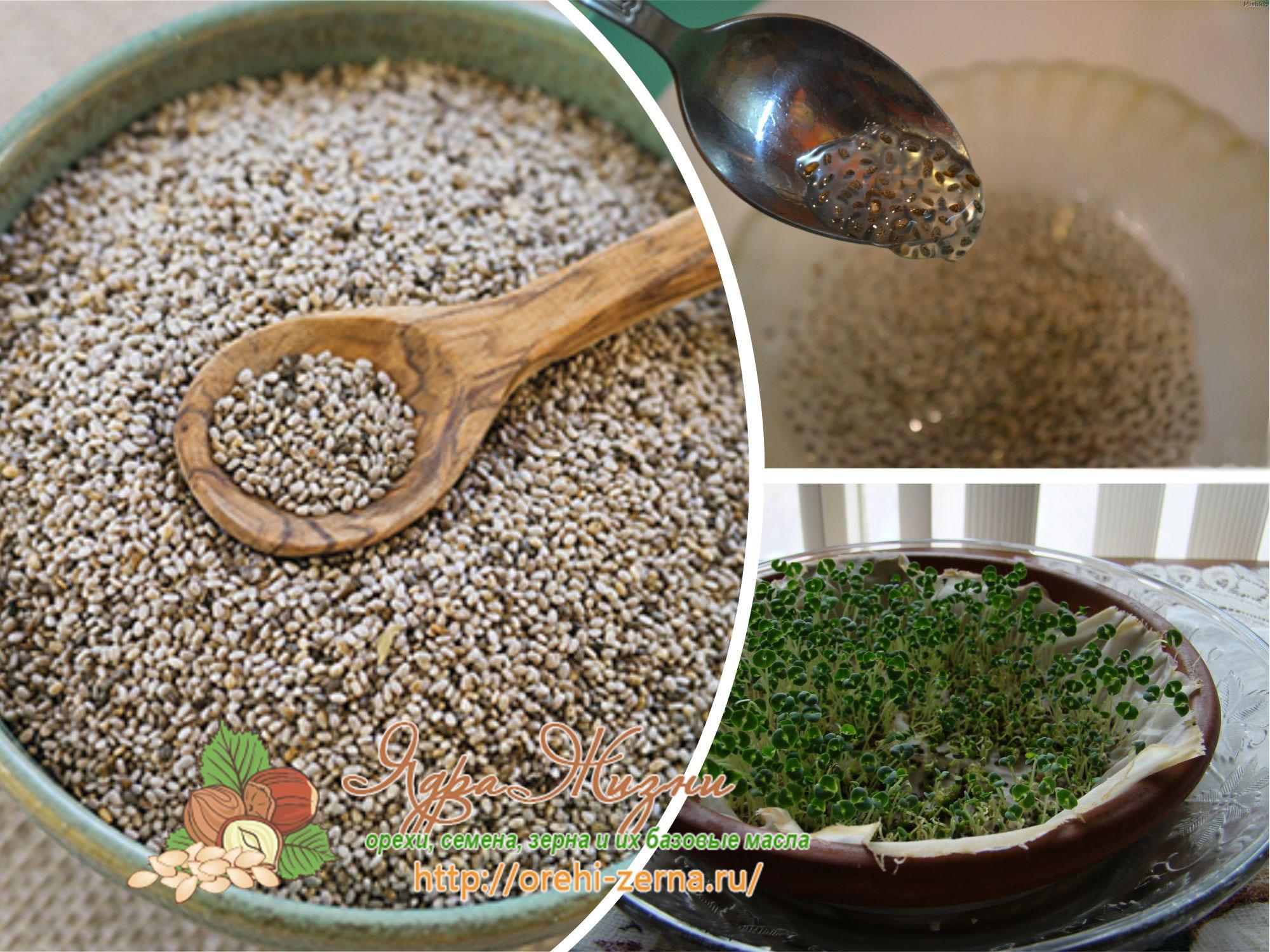 Как проращивать семена чиа в домашних условиях
