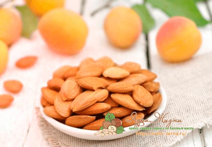 Фото: абрикосовые косточки
