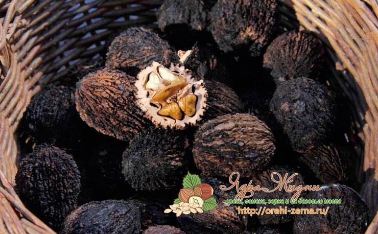 Черный орех польза и вред