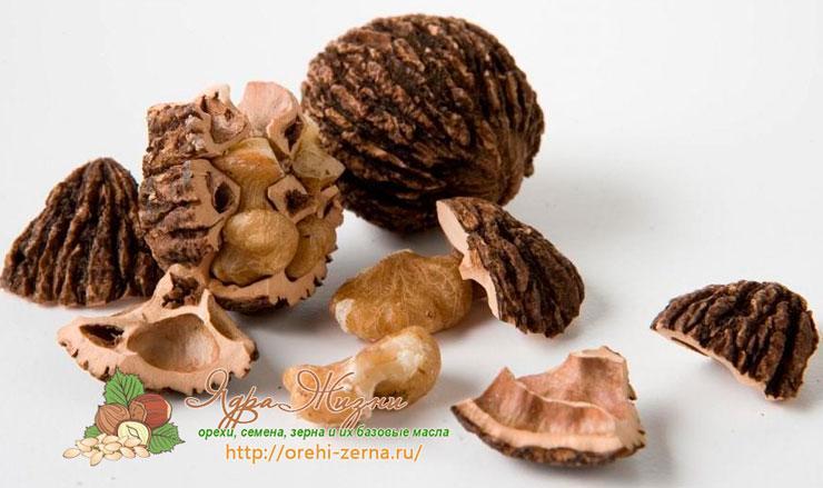 Черный орех: полезные и лечебные свойства