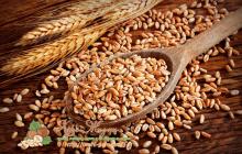 Фото: Полба (полюяная пшеница, эммер)