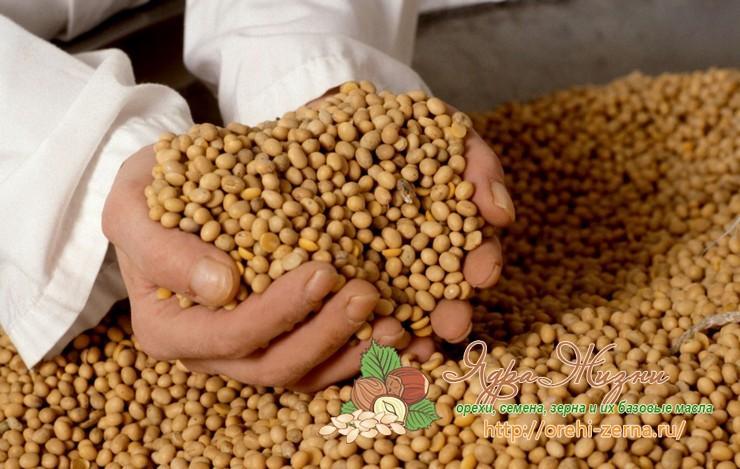 Соя в сельском хозяйстве