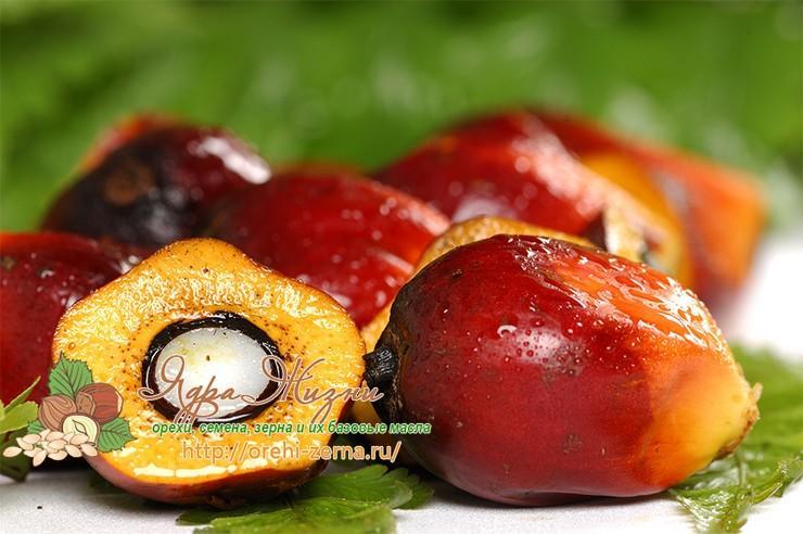 Плоды красной масличной пальмы