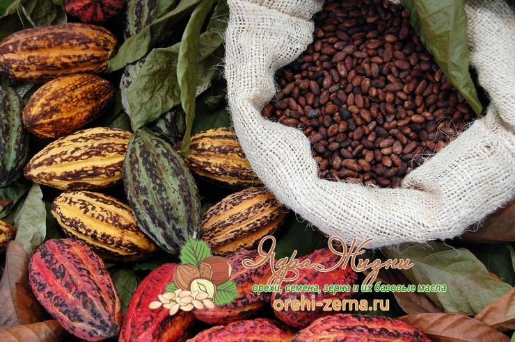 Сорта какао бобов
