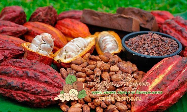 как выглядит какао бобы