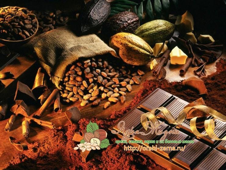 История шоколада: когда появилась первая плитка