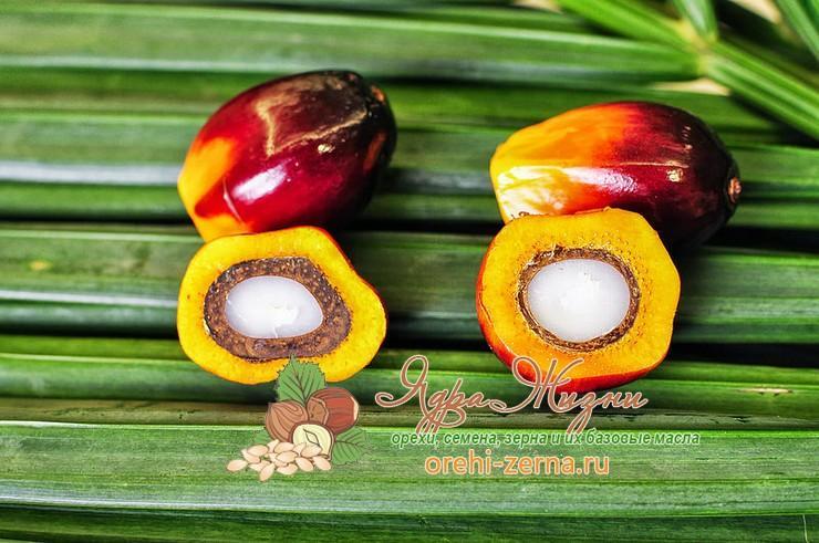 Пальмовый олеин и пальмовое масло разница