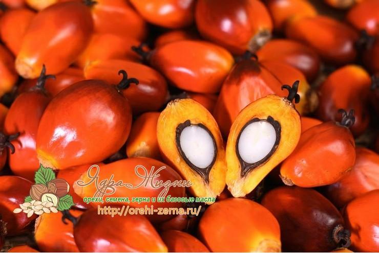 как пальмовое масло выводится из организма