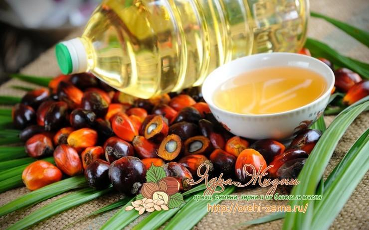 польза или вред пальмового масла в питании человека