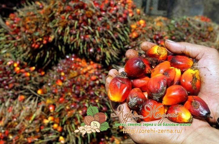 из чего делают пальмовое масло