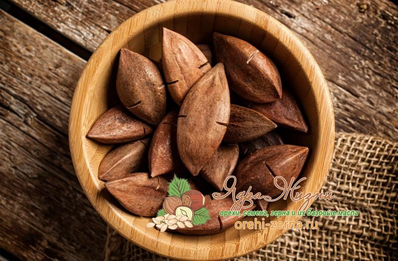 Орех пили полезные свойства