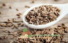 Семена зиры