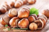 Миниатюра к статье Всеми любимый фундук — обзор всех свойств лесных орешков