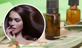 Миниатюра к статье Как использовать камфорное масло для волос для роста и лечения фолликул, полезные маски в домашних условиях