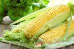 Миниатюра к статье Кукуруза — обзор злака, польза и вред, свойства, сорта и применение