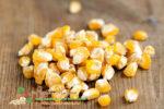 Миниатюра к статье Польза и вред пророщенной кукурузы и как ее проращивать в домашних условиях
